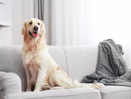 Pets and Furniture Cleaning Essentials